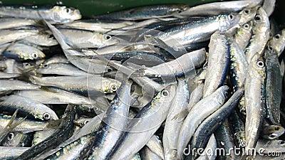 Peixes de mar frescos em um mercado Mercado do marisco Sardinhas no gelo para a venda na rua Vendedor de peixe que vende peixes e vídeos de arquivo