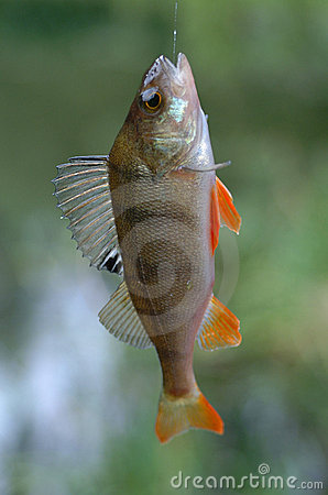 Peixes na linha