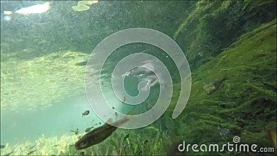 Peixes no vídeo do estoque do lago filme