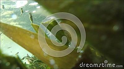 Peixes no vídeo do estoque do lago vídeos de arquivo