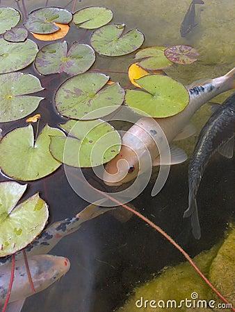 Peixes tímidos
