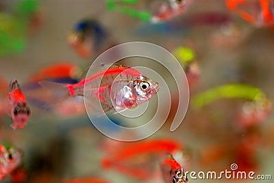 Peixes tropicais bonitos