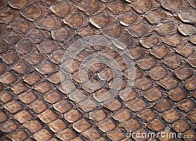 Pele de serpente