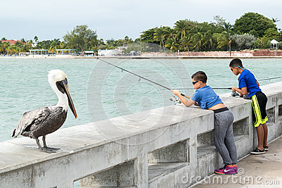Pelican and boys fishing in key west florida keys for Florida fishing license lookup