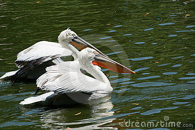 Pelican Paradise