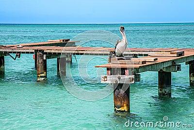 Pelican Peer Stock Photo - Image: 52201763