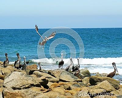 Pelican Point, Sonora, Mexico