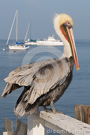 A pelican rests on a fence by the sea.