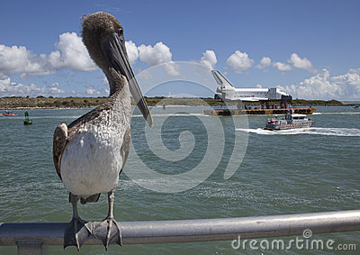Pelican and Space Shuttle Editorial Stock Photo