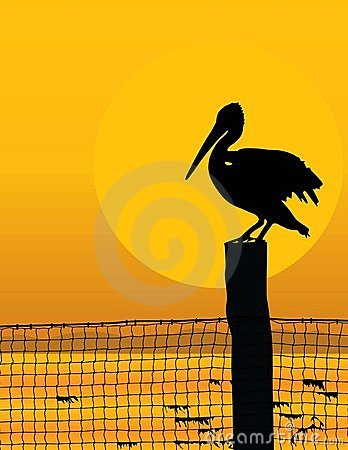 Free Pelican Sunset Royalty Free Stock Photo - 4150845