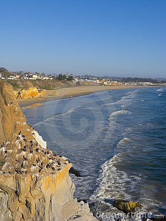 Free Pelicans Cliff At Pismo Beach, CA Stock Photo - 16172840