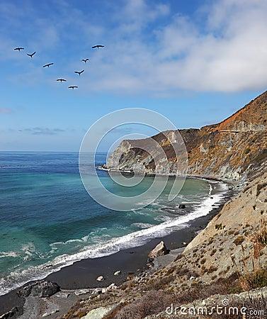 The pelicans over azure ocean