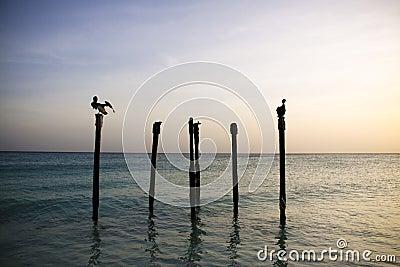 Pelicans resting on Poles