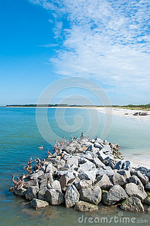 Pelicans sitting on Rocks