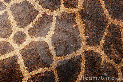 Pelle del cuoio genuino della giraffa