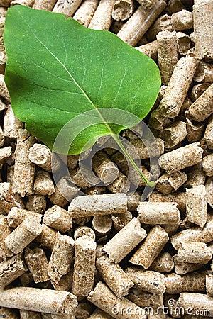 Pelotillas de madera y hoja verde