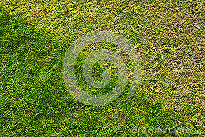 Pelouse d herbe