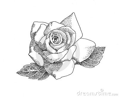 Royalty Free Stock Photography Pen Ink Rose Image15014427on United States Map