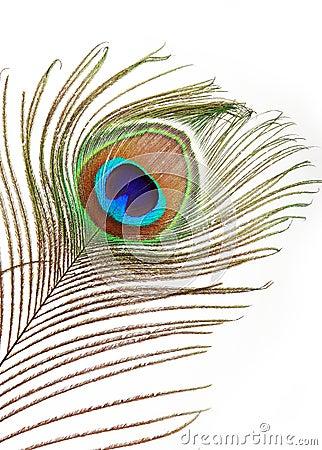 Pena do pav o foto de stock imagem 8176910 - Plume de paon dessin ...