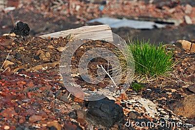 Penacho de la hierba en las rocas
