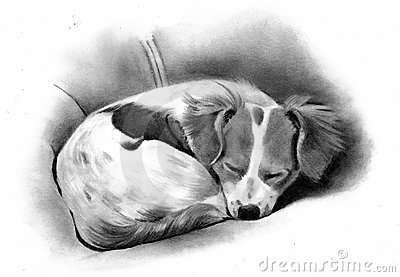 Pencil Drawing of a Sleeping Dog