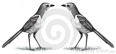Pencil Drawing of Two Birds Face to Face