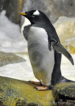 Free Penguin Royalty Free Stock Images - 14222319