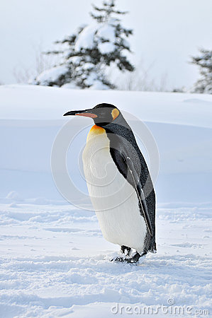 Free Penguin Royalty Free Stock Photos - 27445888