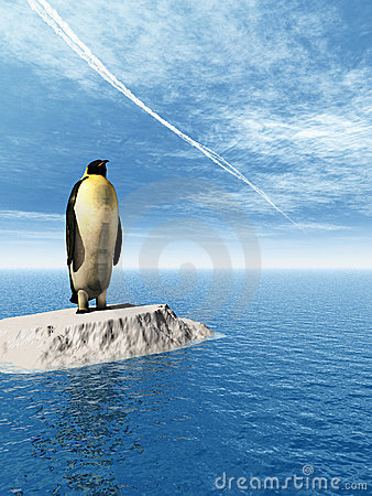 Free Penguin Stock Photos - 4884593