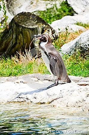 Free Penguin Stock Photo - 74381070