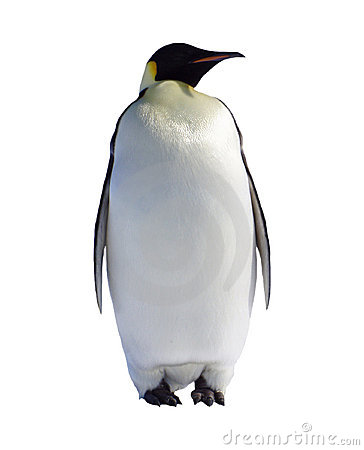 Free Penguin Stock Photos - 997933