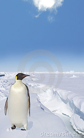 Penguin on the Antarctic Ice