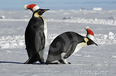 Penguin couple on Christmas