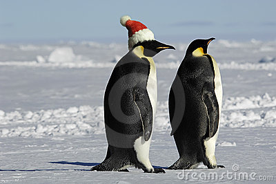 Penguin couple on Xmas
