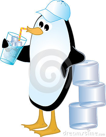 Penguin Drinking Ice Water