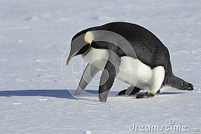 Penguin fitness