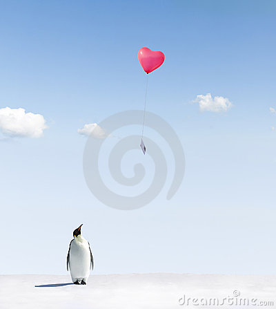 Free Penguin Getting Love Letter Royalty Free Stock Photo - 19070415