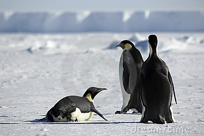 Penguin group in Antarctica