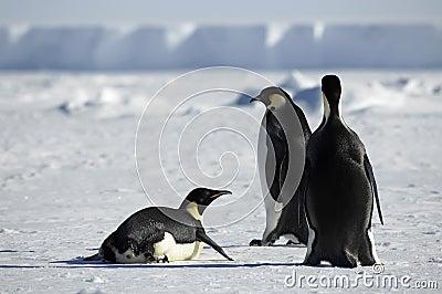 Penguin group in Antarctica