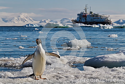 Penguin icebergs cruise ship, Antarctica