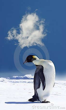 Free Penguin In Antarctica Royalty Free Stock Photo - 1557115