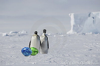 Penguin pair with easter eggs
