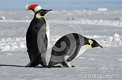 Penguin pair on Xmas