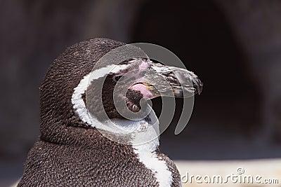 Penguin Power
