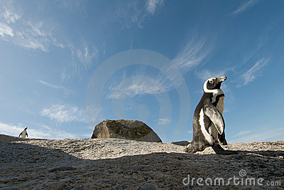 Penguin  rock Simonstown