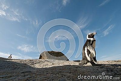 Penguin  rock Simonstown