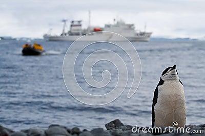 Penguin stance
