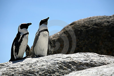 Penguin Two