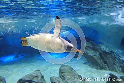 Penguin underwater in sea cave scenery