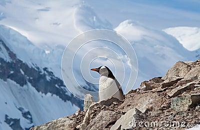 Penguin view